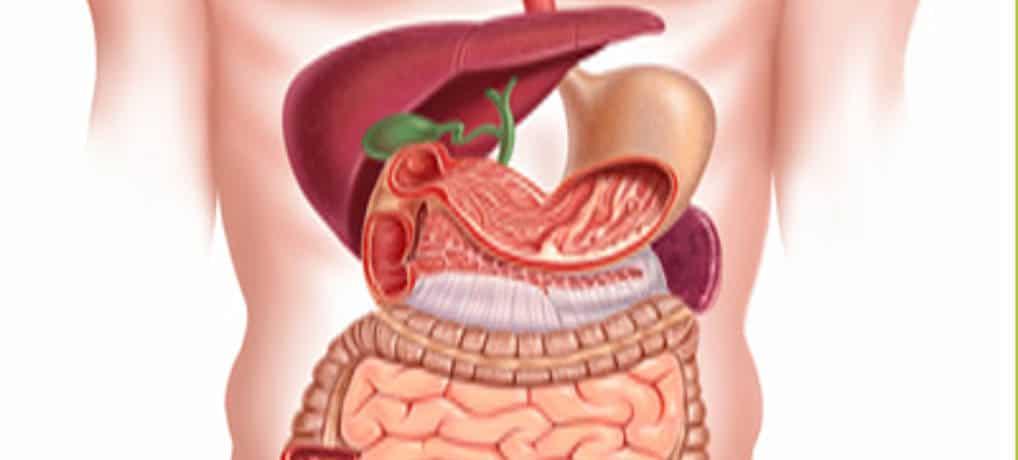 La importancia de cuidar los intestinos