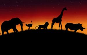 fauna animal alrededor del planeta