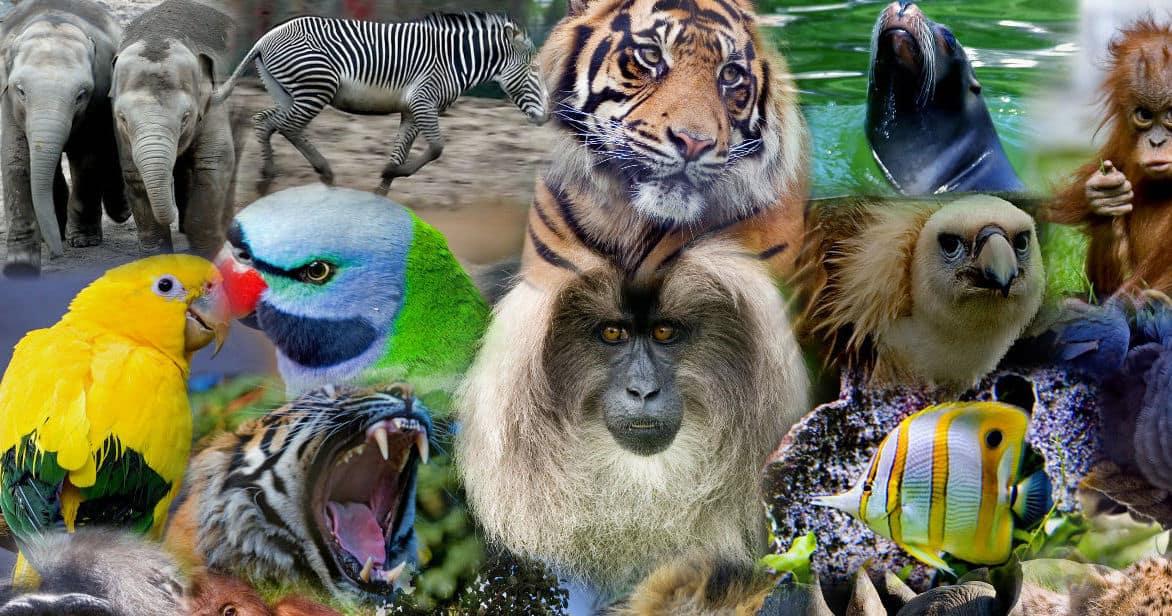 información sobre enciclopedias de animales