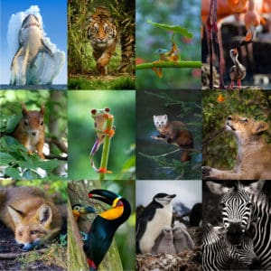 reino animal en webs online de animales