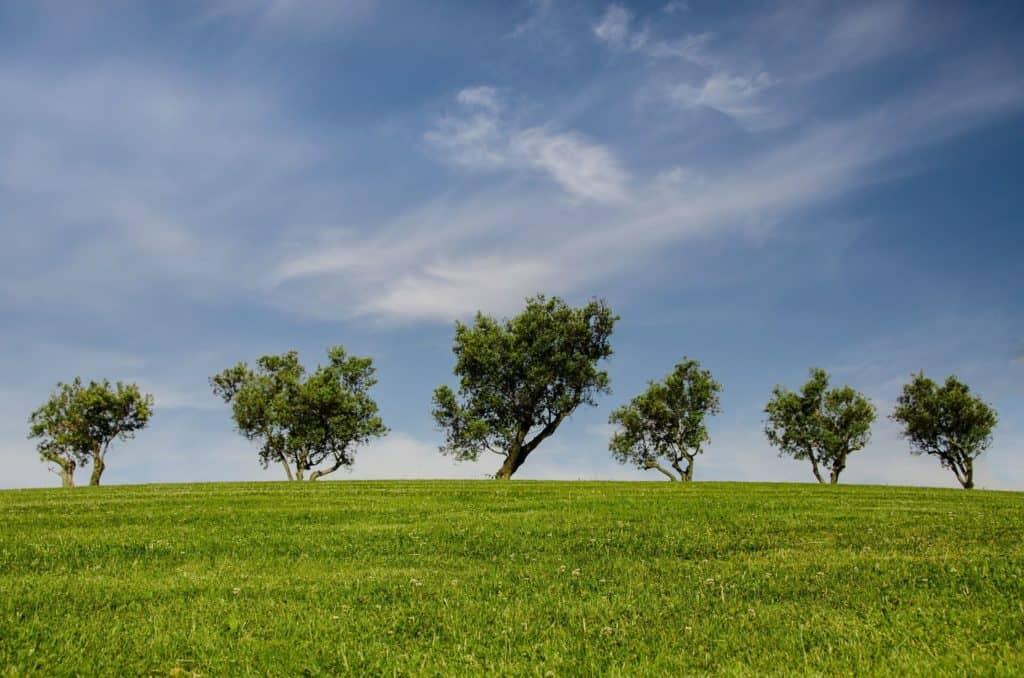 Árboles, medio ambiente