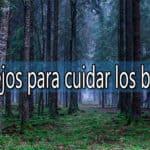 consejos para cuidar los bosques españoles