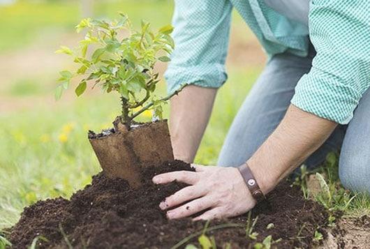 plantar un árbol para aumentar la cantidad de árboles
