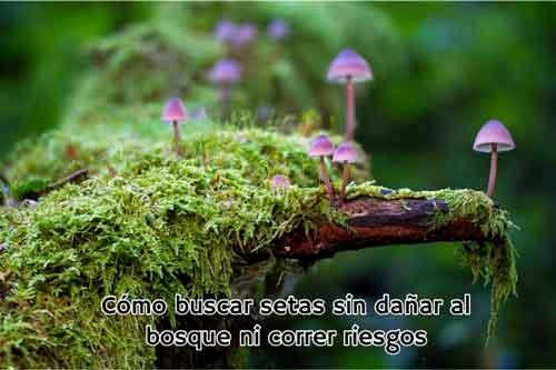 buscar setas sin danar bosque ni correr riesgos